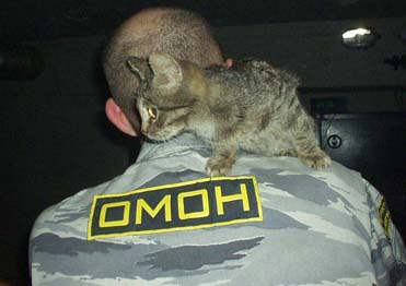 Omon Patch